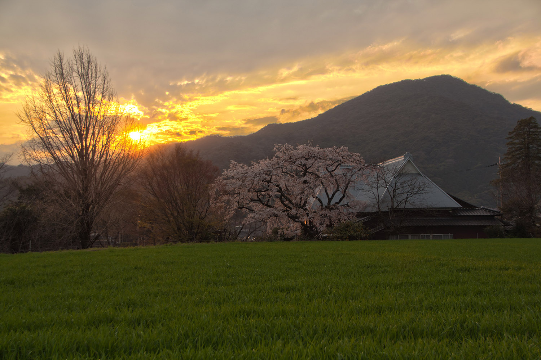 佐賀県神埼市宝珠寺の姫枝垂レ桜02