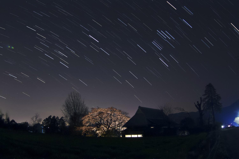 佐賀県神埼市宝珠寺の姫枝垂レ桜05ライトアップ