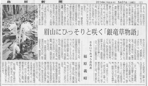 銀竜草記事