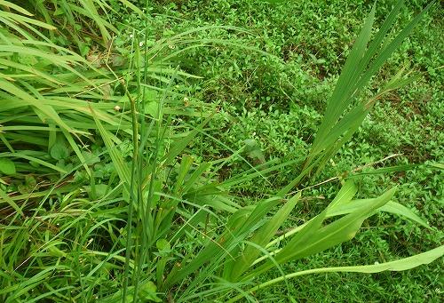 IMGP6015-crop.jpg