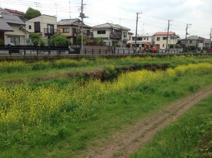 20140429nogawa_1_convert_20140429224512.jpg