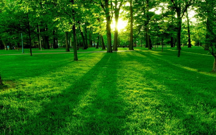 Park-the-morning-sun-the-green-trees-and-grass_1920x1200.jpg