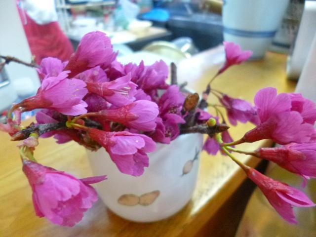 寒緋桜ともいうんだそうですって