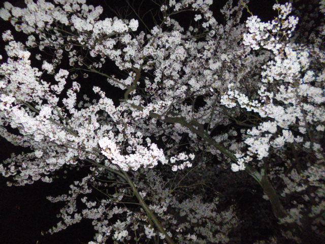 この日の北陸は桜が満開でした