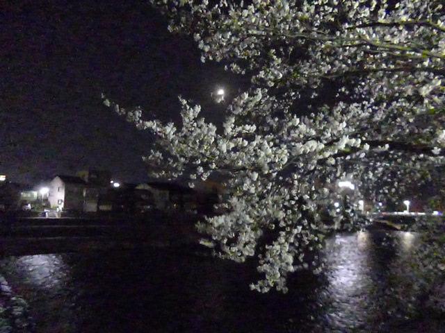 花の季節には夜桜も美しい犀川のほとりから徒歩1分です