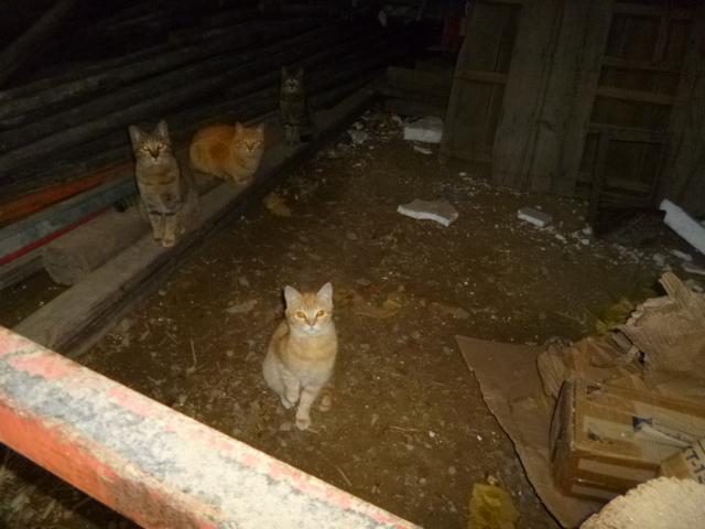 ネコ,ネコ,ネコ,ネコ