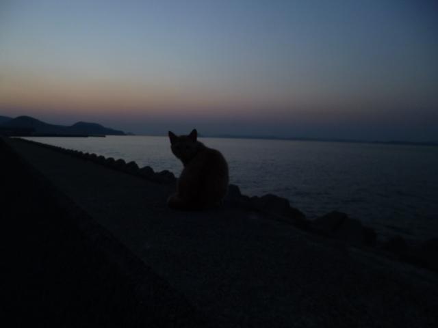 ・・・! ネコや