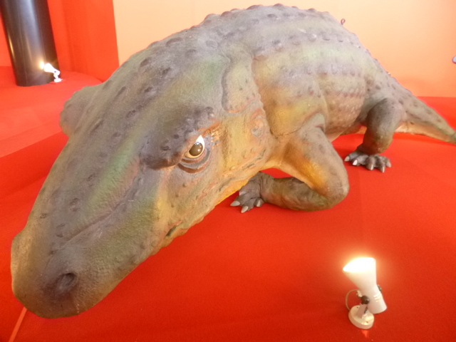 爬虫類型両生類でしたっけ