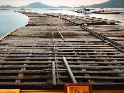 3232014牡蠣養殖S2