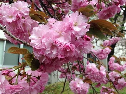 4162014花のまわりみちS3