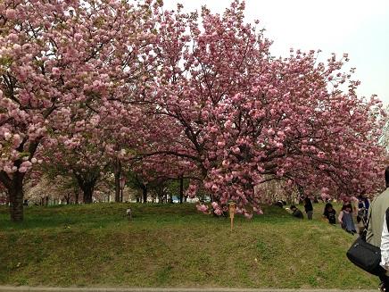 4162014花のまわりみちS4