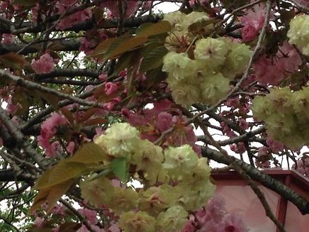 4162014花のまわりみちS5