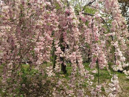 4162014花のまわりみちS0