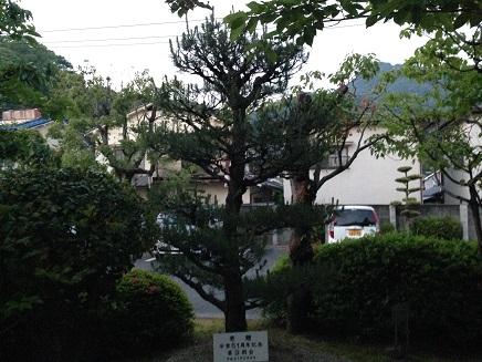 5222014広高校9期松S