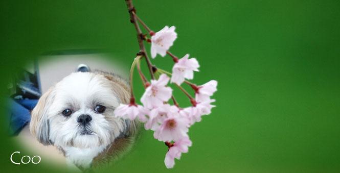 a1180_014008_m桜