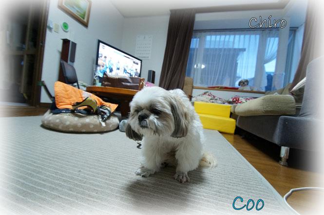 DSC06623_4651.jpg
