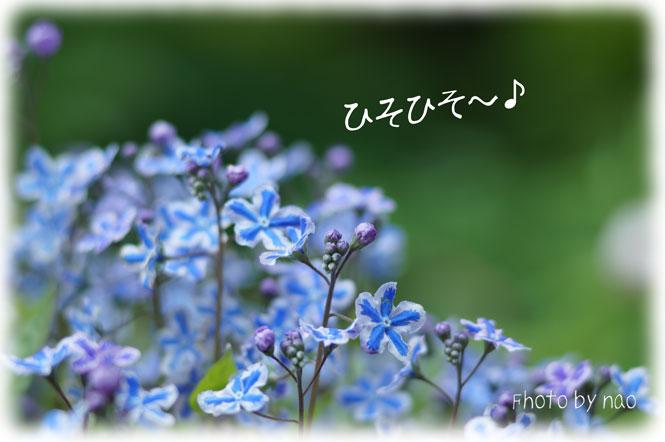 DSC08256_5574.jpg