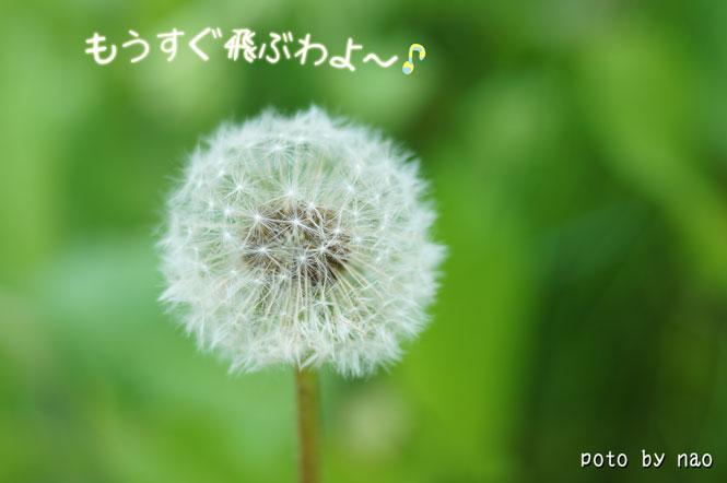 DSC08269_5583.jpg