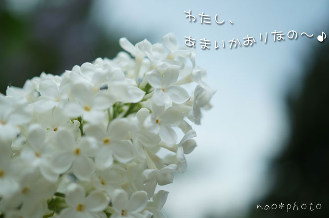 DSC08371_5681.jpg