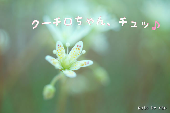 DSC08385_5685.jpg