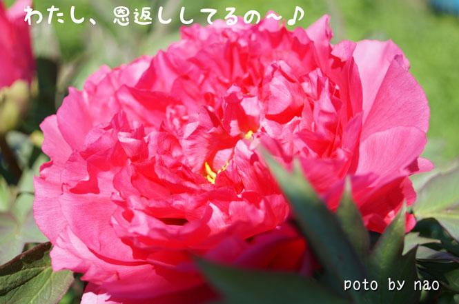 DSC08559_5652.jpg