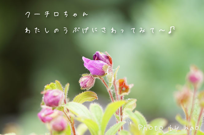 DSC08645_5725.jpg
