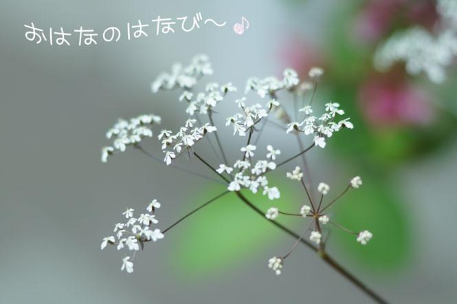 DSC08659_5733.jpg