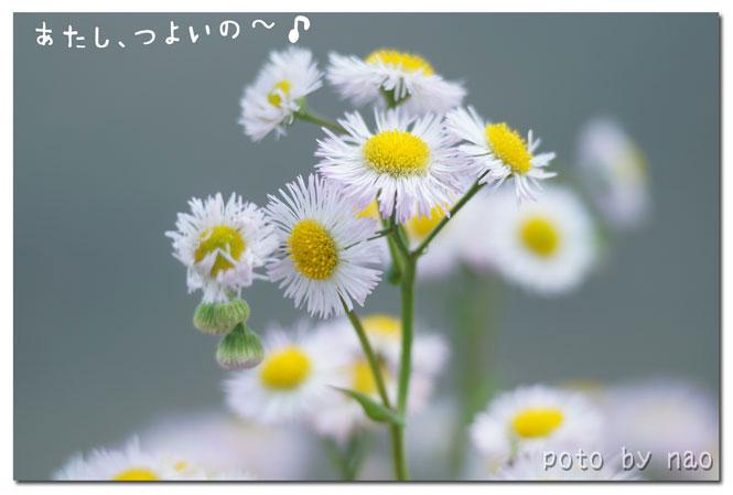 DSC08719_5762.jpg