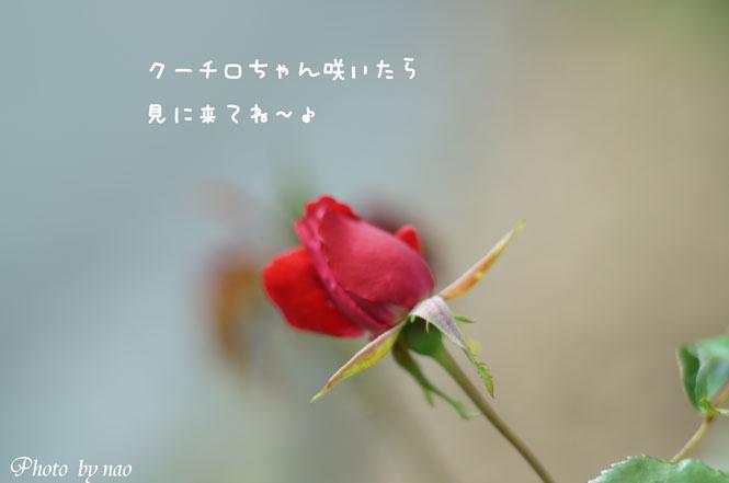 DSC08720_5763.jpg