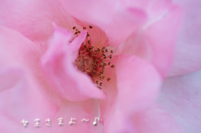 DSC09239_6043.jpg