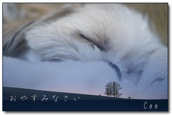 OHT96_yuugurenitatazumu5hon.jpg