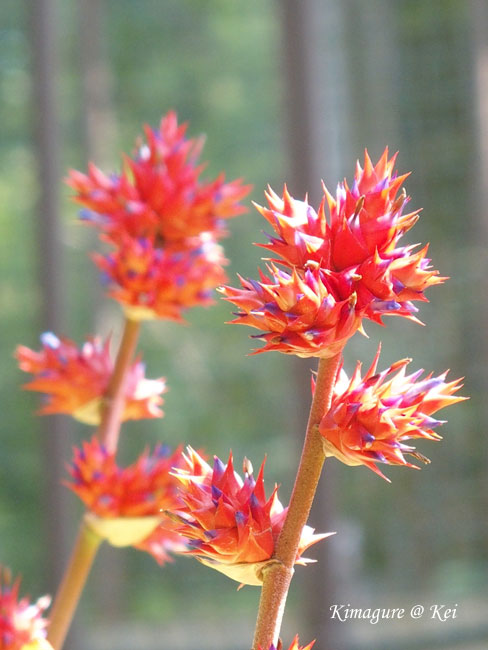 温室の中のお花♪