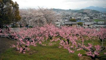 2014-4-6sanuki026.jpg