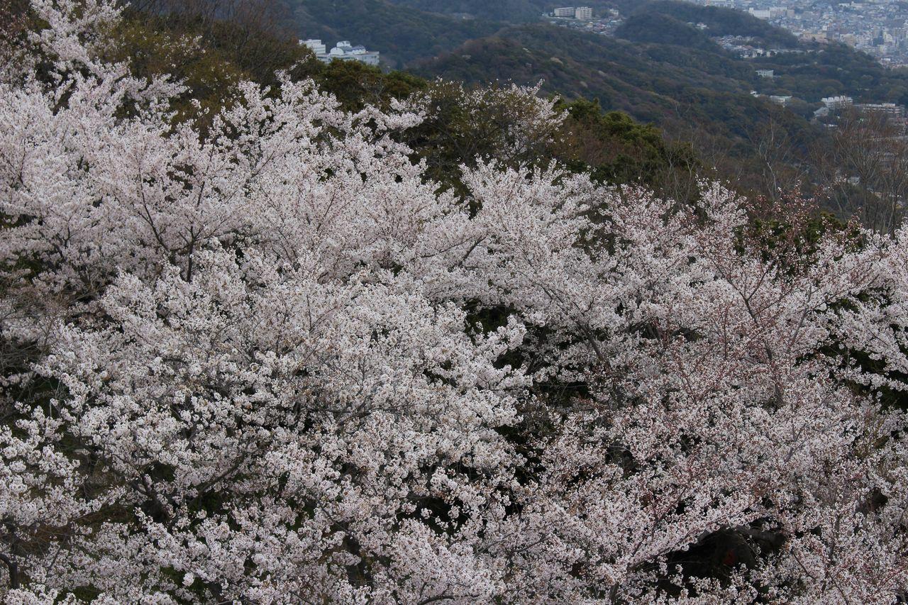 須磨浦公園-31