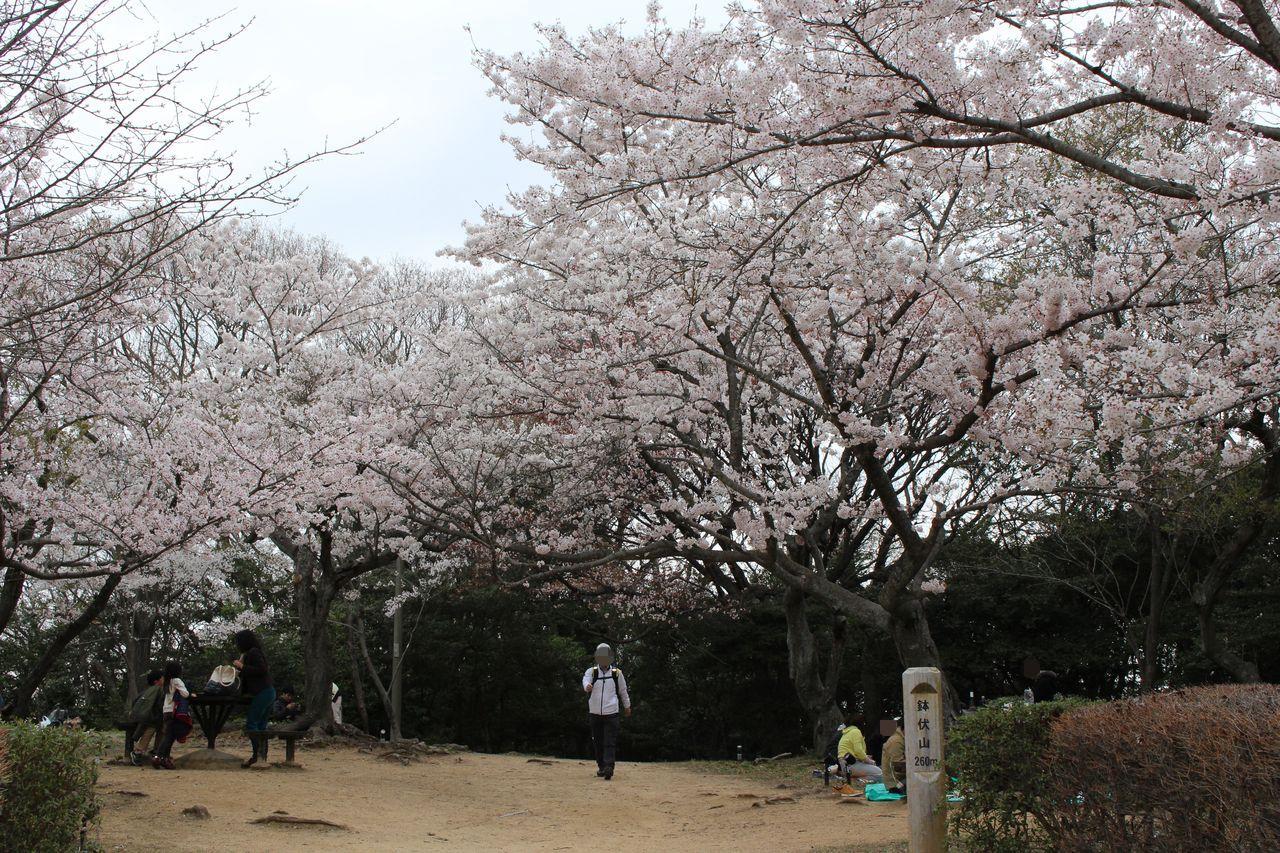 須磨浦公園-34