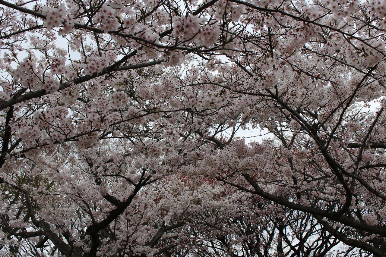 須磨浦公園-35