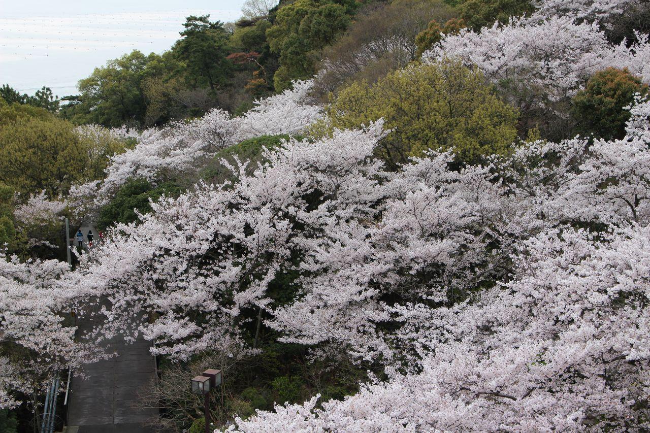 須磨浦公園-17
