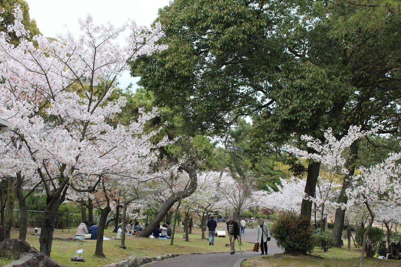 須磨浦公園-40