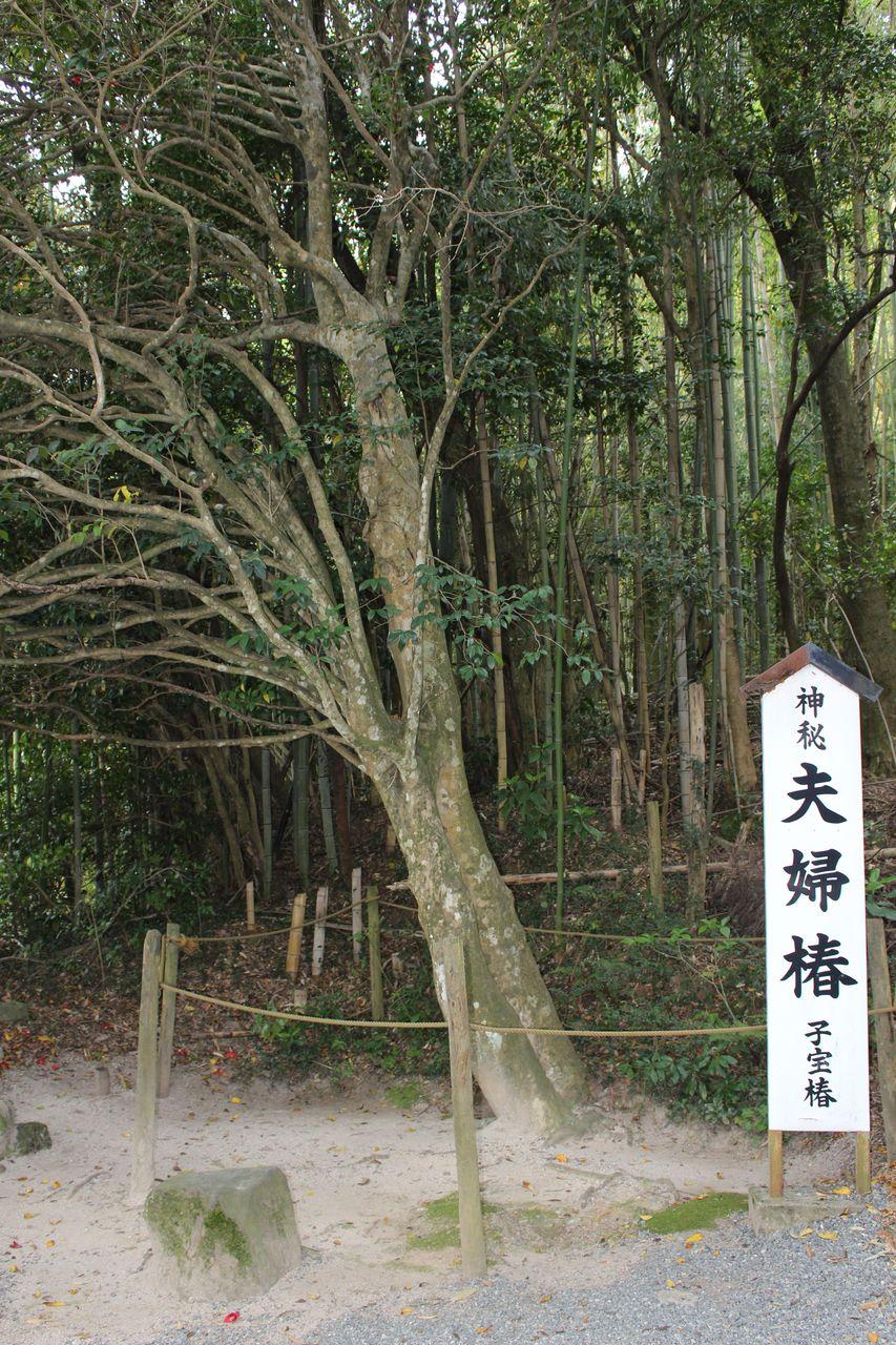 八重垣神社-30