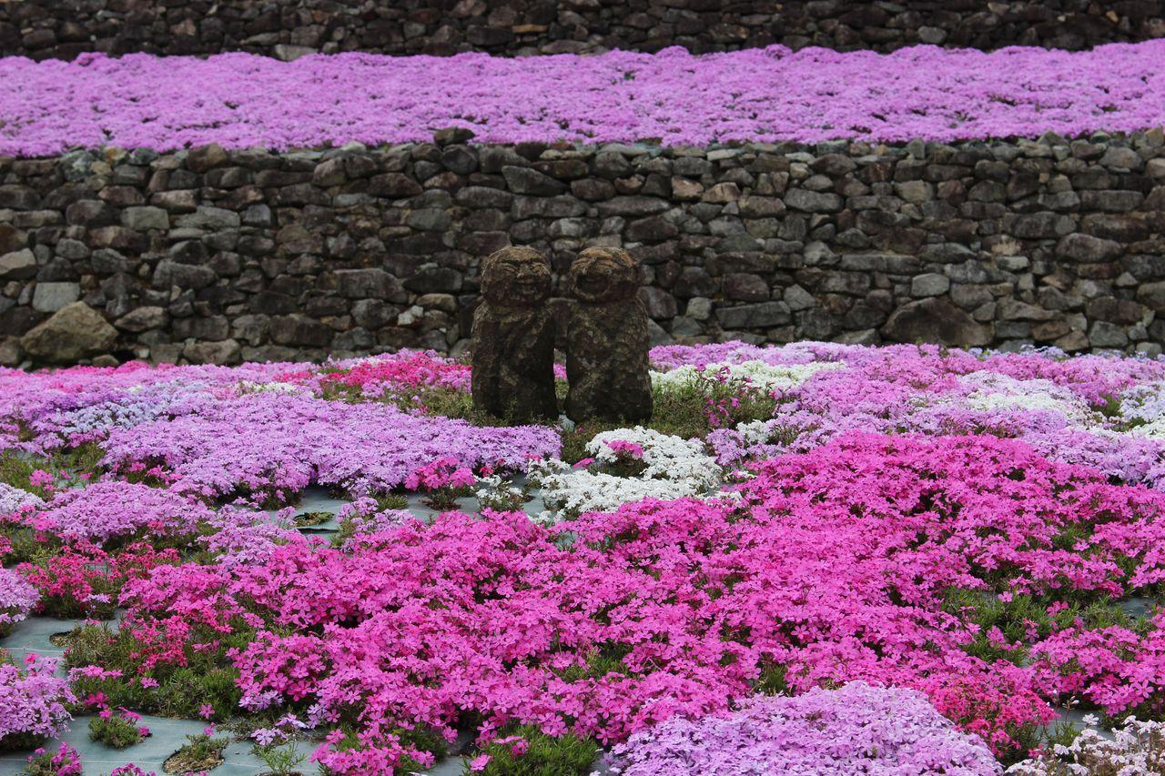 花のじゅうたん-10