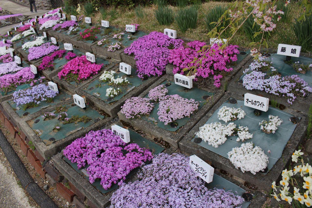 花のじゅうたん-16