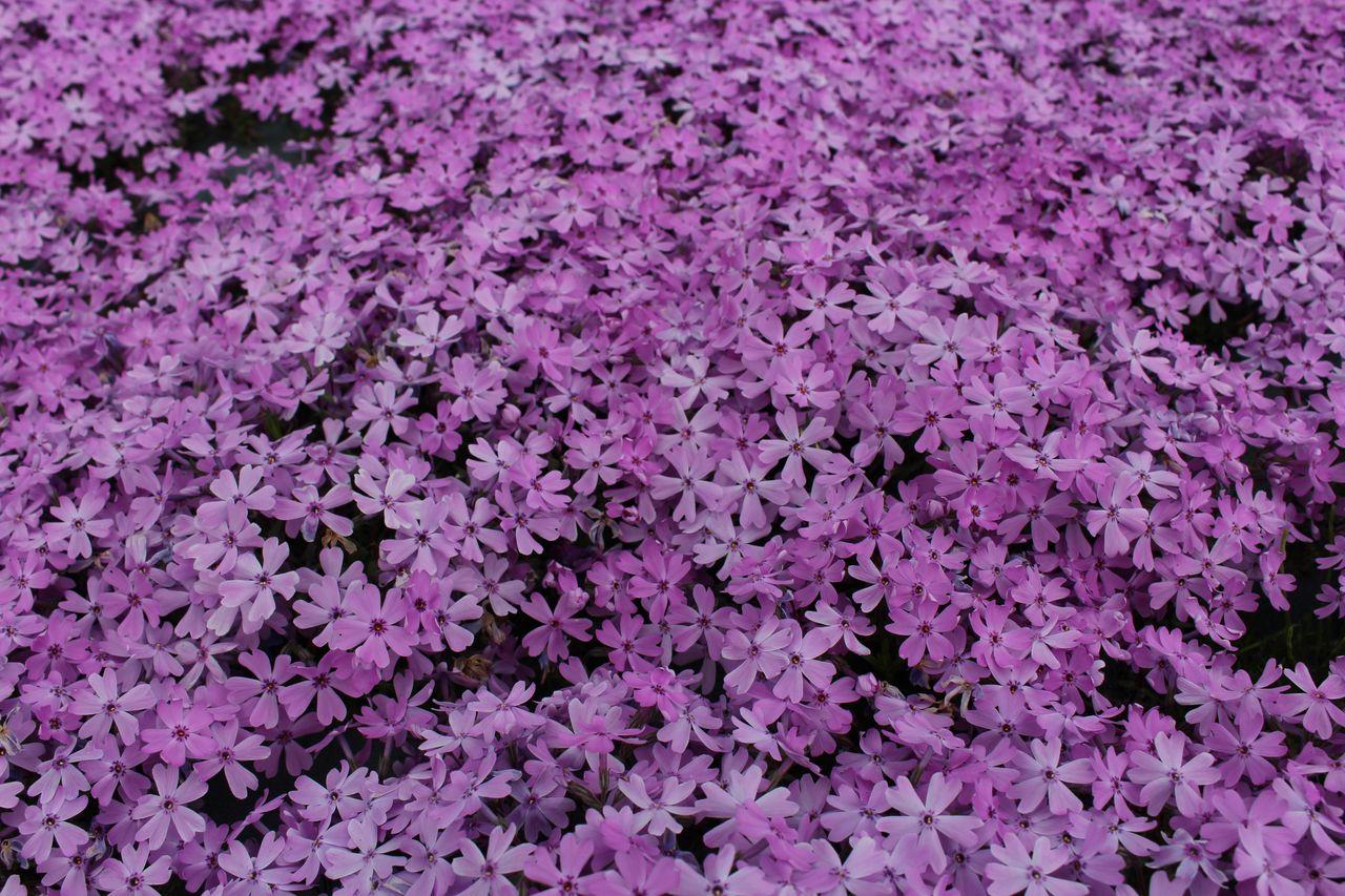 花のじゅうたん-22