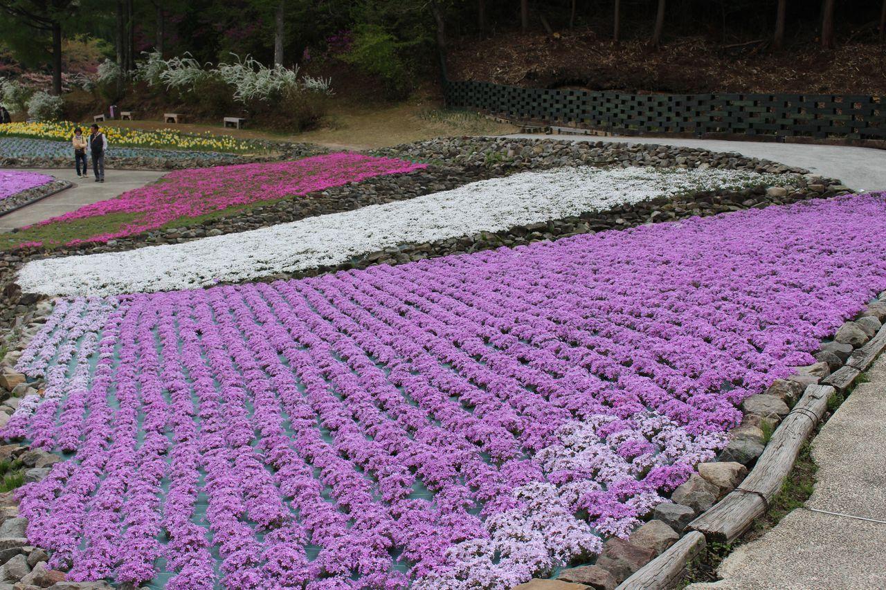 花のじゅうたん-25