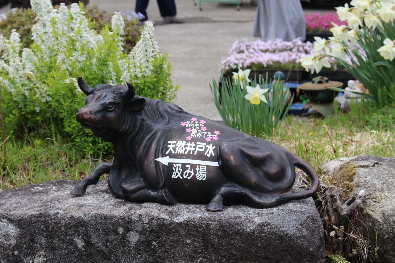 花のじゅうたん-14