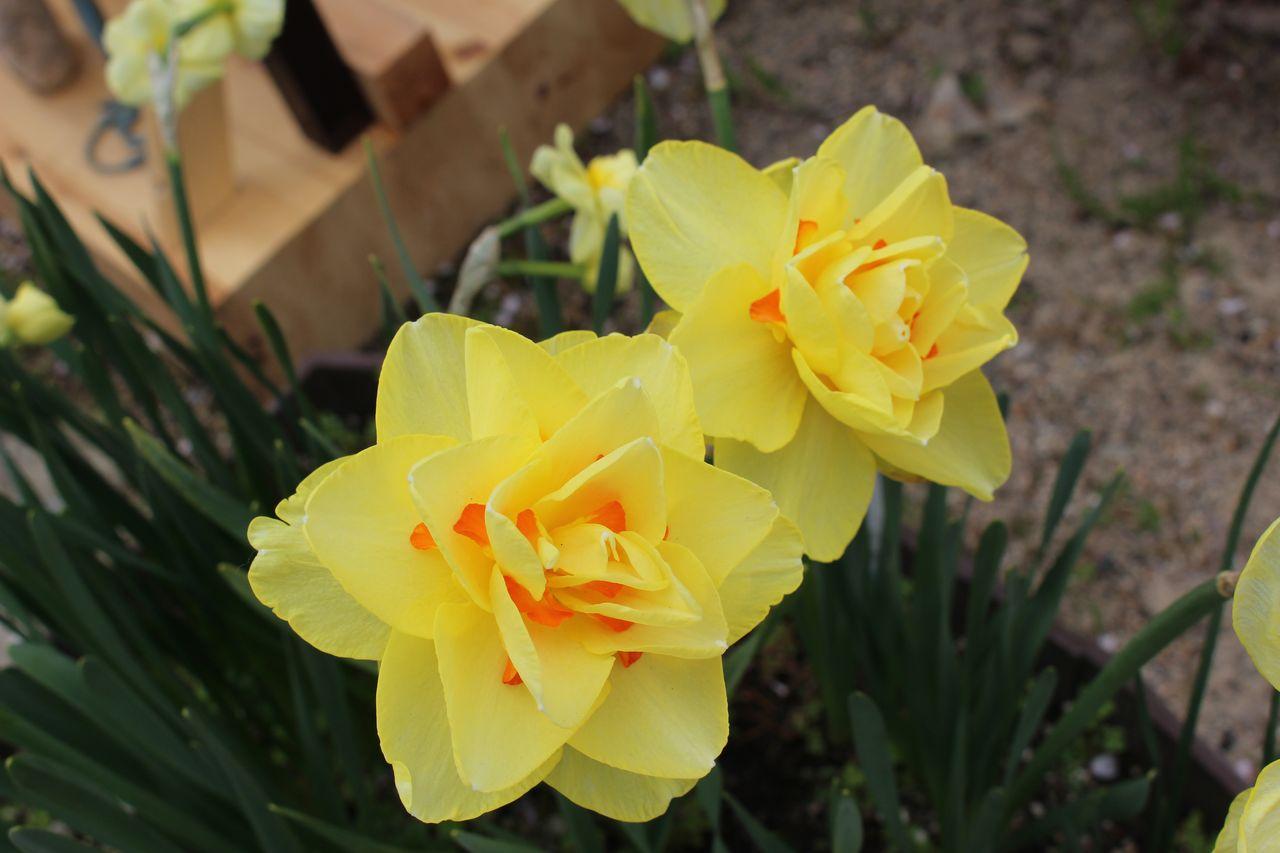 花のじゅうたん-28