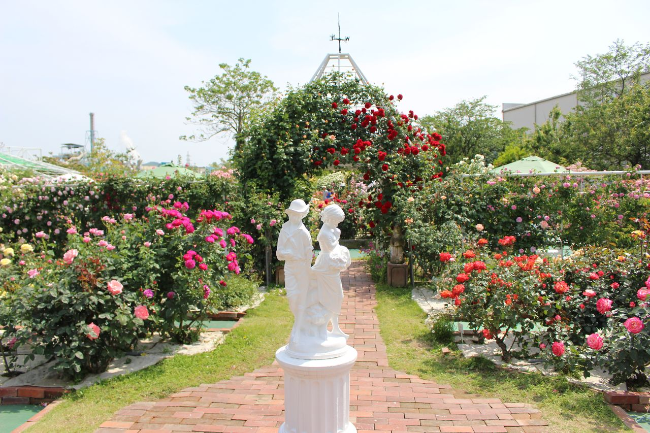 姫路ばら園-13