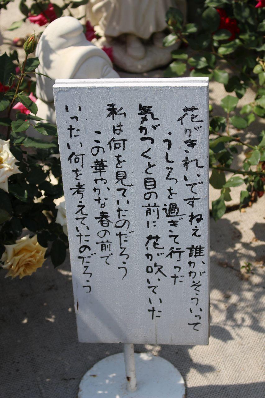 姫路ばら園-26