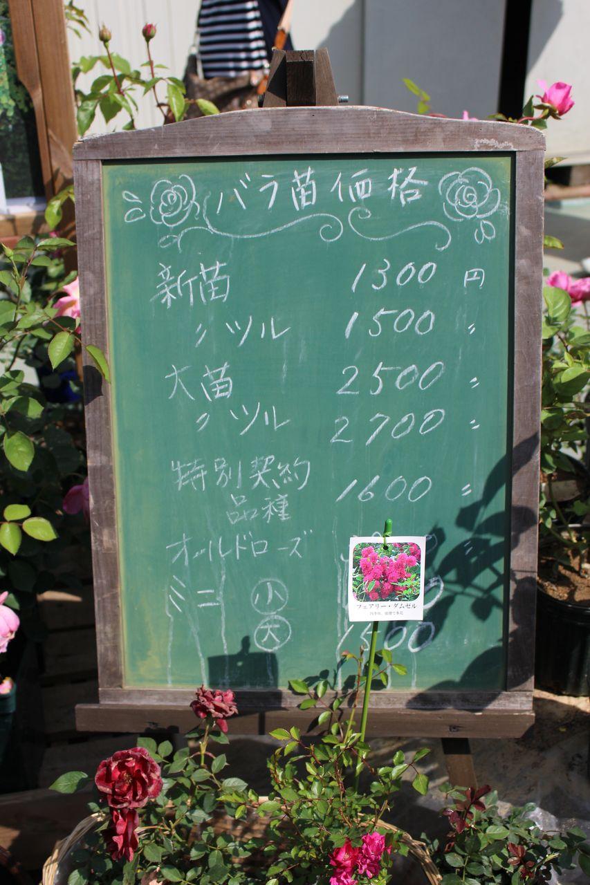 姫路ばら園-28