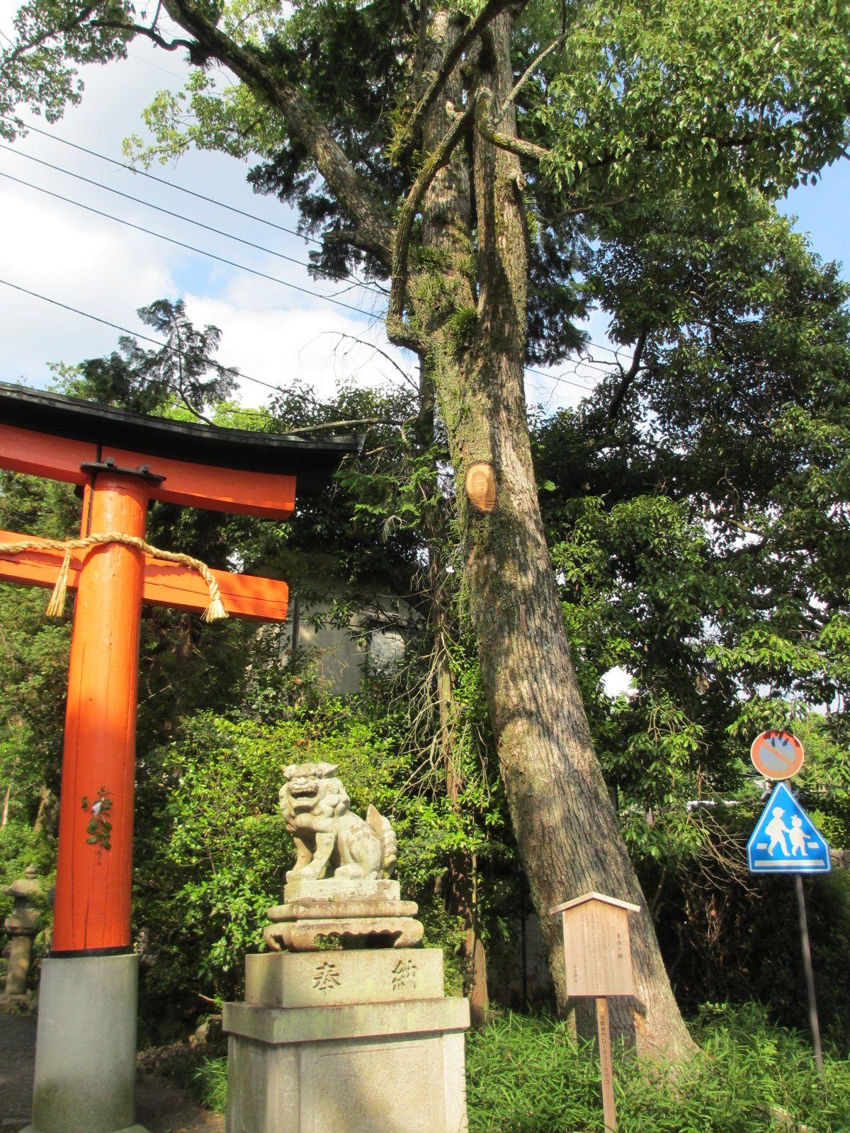 宇治神社-3