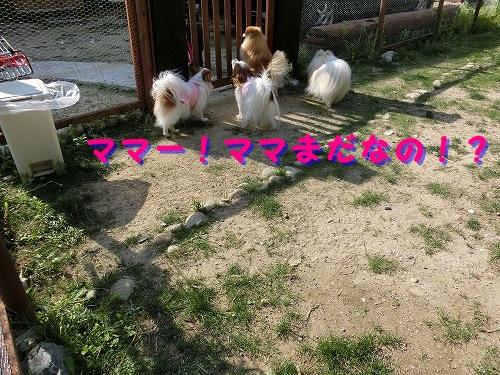 051_2014051323293625b.jpg